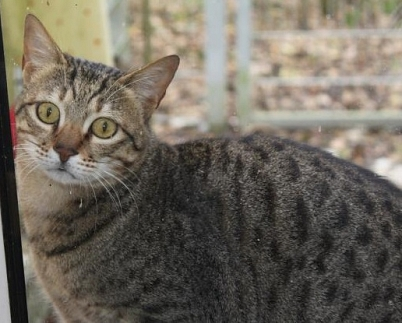 Kater Lawrence©Verein Tiere in Not e.V.